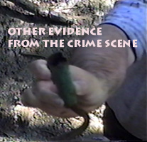 Evidence at the crime scene
